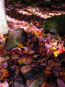 Fallen leaves make a carpet of color on trail near the Kancamagus Highway, N.H. Craig Davis/Craigslegz.com